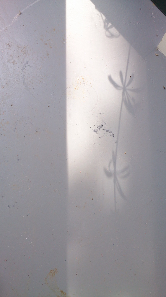 shadow of a flower on the studio floor