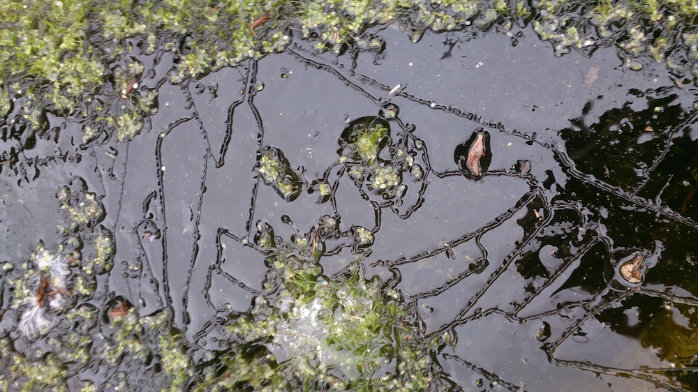 close up of leaf marks in the ice
