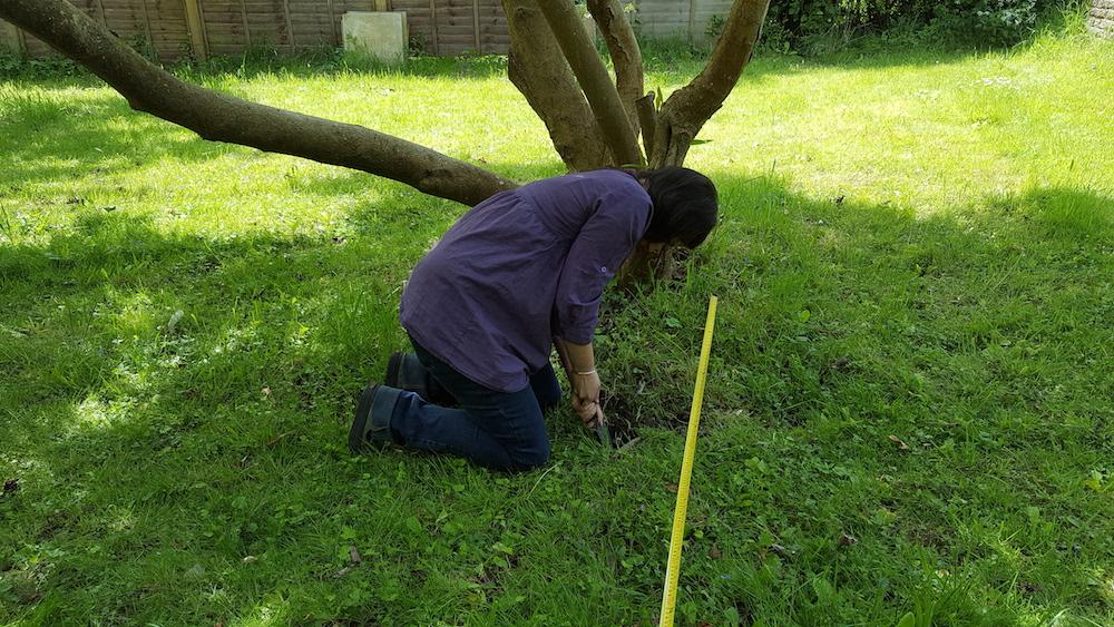 Rachel digging under the magnolia tree