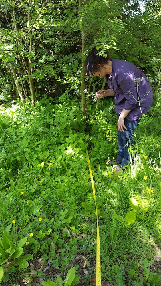 Rachel measuring in the foliage
