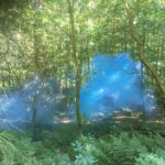 blue clouds of smoke low in the trees dappled with sunlight