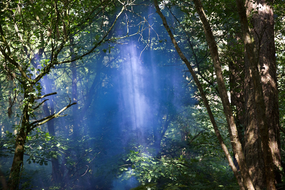 a shaft of blue smoke between the trees with shafts of sunlight within the smoke