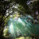 green smoke in the trees with dappled sunlight