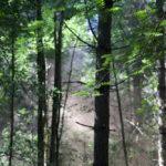 dispersed orange smoke in the trees
