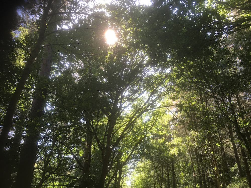 sun through the canopy of trees