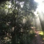 shards of sun through the trees