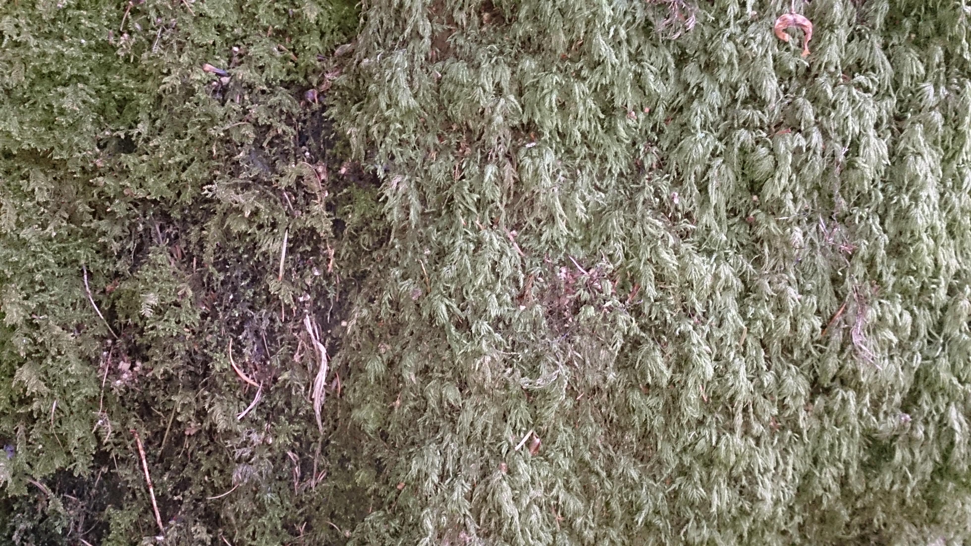 dry moss